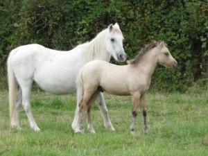 Pheobee et Quooquine ( Chesnoy )