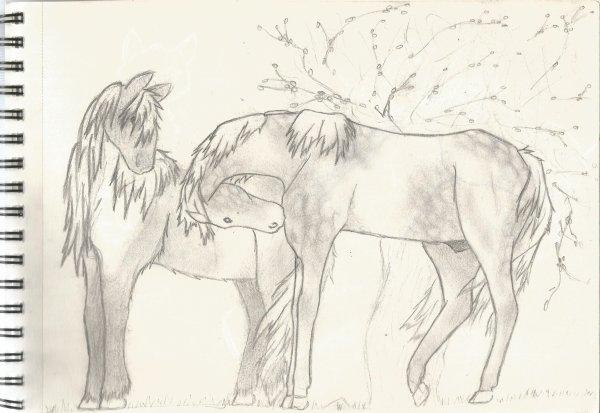 Quelques dessins ♥