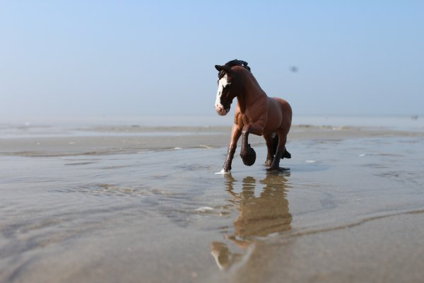 """"""" Avec la mer du Nord comme dernier terrain vague et des vagues de dunes pour arrêter les vagues ! """""""