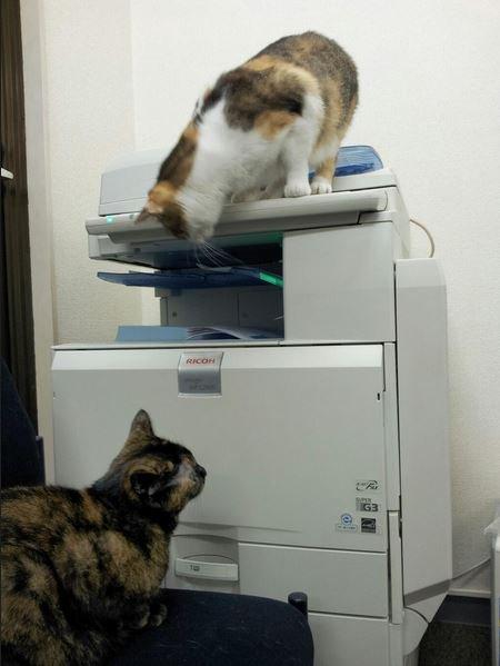 Viens travailler avec ton chat, t'auras une prime !