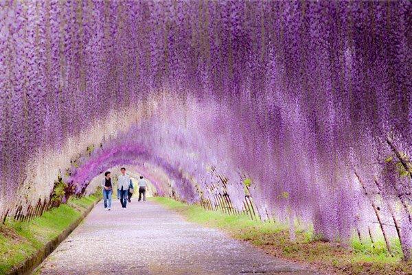 Un jardin japonais magnifique !