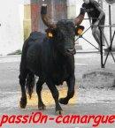 Photo de passi0n-camargue