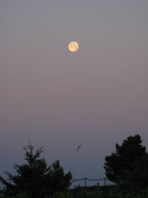 Le clair de Lune m'inspire.