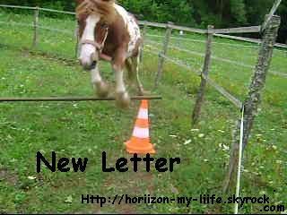 New Letter !!!
