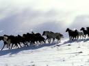 Photo de Le-cheval020