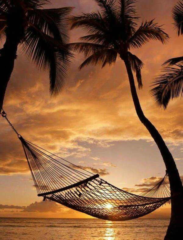 La fin des pluies est imminente, c'est le moment ou jamais de venir découvrir la végétation luxuriante du Sénégal sous un soleil rayonnant !!  Chaleur, plage, ballades, en ce moment tout est possible et agréable au pays de la Teranga ! L'eau est à 30 degrés sur la petite côte, de quoi vous détendre un peu avant de passer une soirée à siroter un cocktail, ou faire des grillades en bord de mer... Nous sommes en octobre, le froid et la pluie gagnent l'Europe, venez prolonger l'été parmi nous, au programme : farniente y caliente !!!  Pour tous renseignements : contactez Marcel Birame Sene
