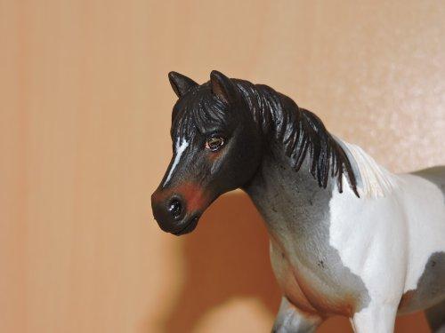 Custom du cheval d'école
