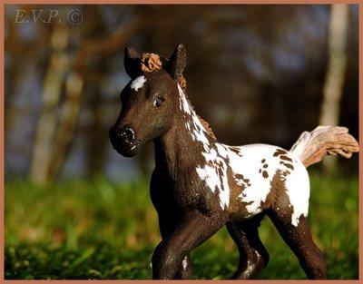 Domaine Equestre de Bois le Comte