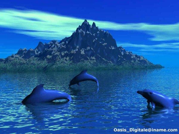 Des dauphins pour tortue3324
