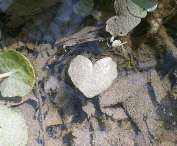 La pire souffrance, c'est d'aimer un coeur qui lui aime déjà ailleurs.. !