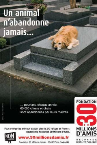 Nos chiens vous attendent pour une vie meilleur.