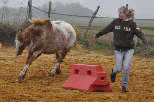 """"""" Vous ne pouvez demander à n'importe qui de devenir votre ami..... le cheval il suffit simplement de le lui demander... mais demandez le lui vraiment.""""  Ray Hunt"""