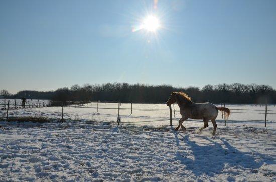 Neige, neige, neige !!