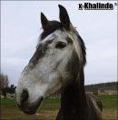 Photo de x-Khalindo