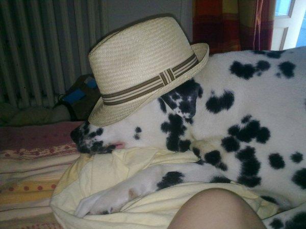 mon chien en mode bronzette mdr