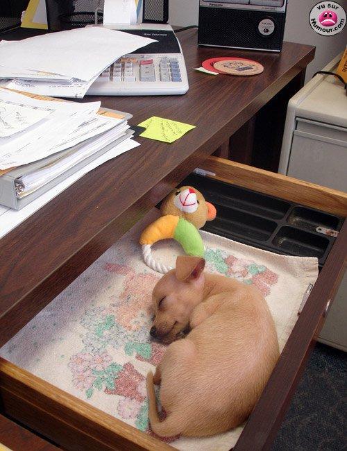Travailler en compagnie de son chien...