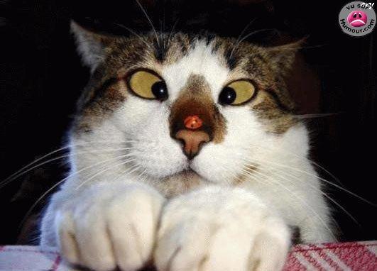 Le chat et la coccinelle !