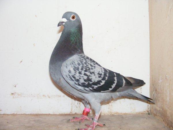pour info blog http://meunier.skyrock.com/profil/