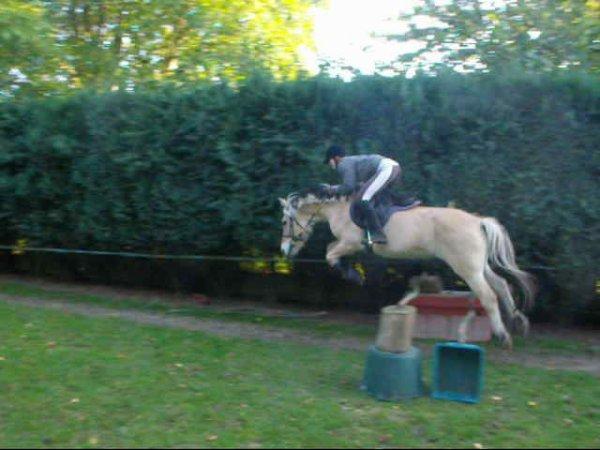 Un poney, ce parallélisme parfait, Happy. ♥