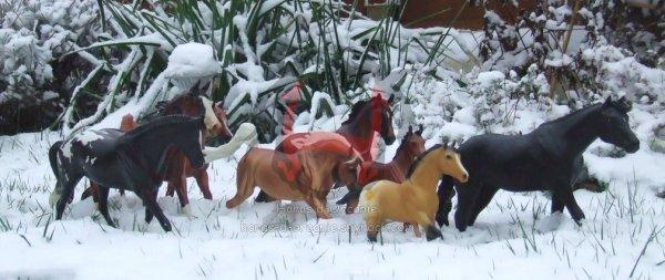 Le haras est sous la neige!!!