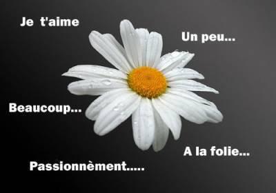L'AMOUR....PEUT  ETRE  SUBLIME, MAIS  AUSSI  BIEN  DOULOUREUX....