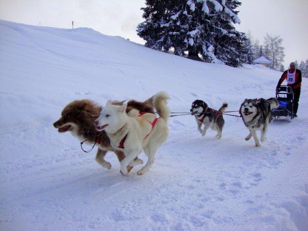 Course de Gryon (Suisse) 2012