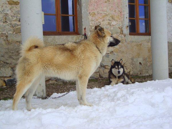 Danka (et Amarok derrière)