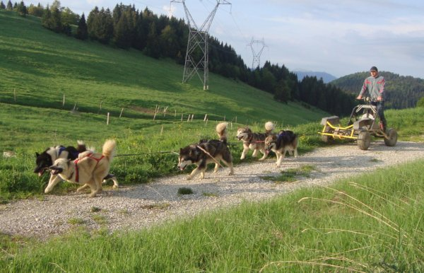 Faro Danka en leader, Amarok, puis Ciska Fanouk en wheel dog au depart