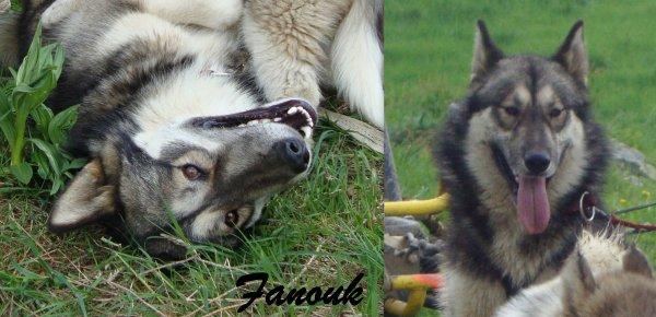 Fanouk, un peu plus enjoué ! :)