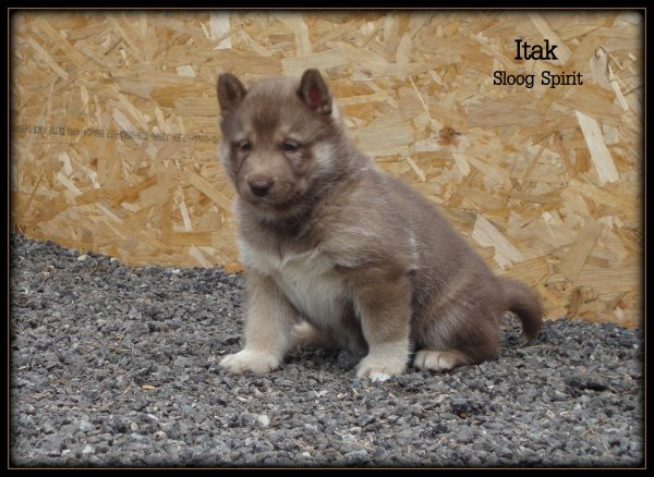 ITAK (notre fifille !)