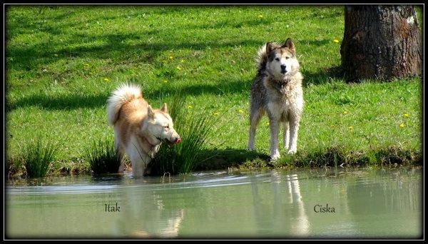 ITAK & CISKA (la dernière et la première) aux plans d'eau
