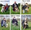 Voici quelques amies de Dinan Sport Canin