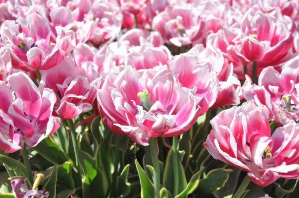 Fleur (4)