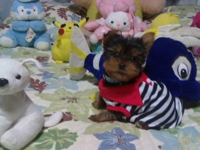 Mon chien youki