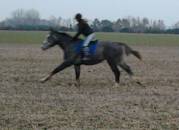 l'équitation bien plus qu'une passion