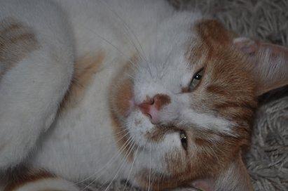 SPIROU ( mon chat a moi )