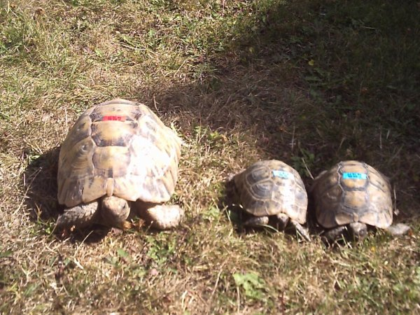 mes tortues