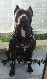 Photo de dog-de-belgique
