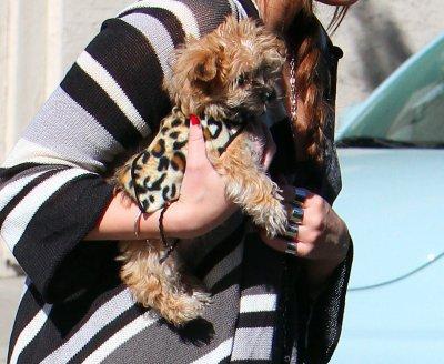 Dimanche 6 janvier 2011 = Miley et son mignon petit chien son de sortie à Los Angeles.