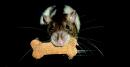 Photo de Ratten