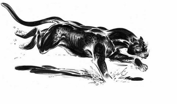 Panthère Noir