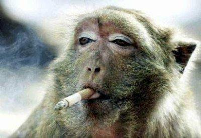 Regarde Mon Ce Singe La Qui Fume Il Es Vraiment Drole Blog De Lebeau Jeanbernard