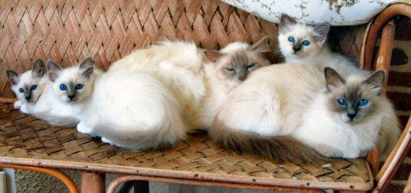 L'amitié  c'est  le réconfort  du  coeur
