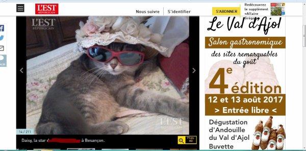 Mon chat Daisy  dans  un concours photos  :)