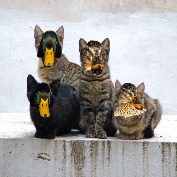Les chats de Cindy viennent de Mars  :D