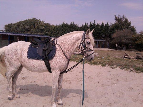 Si l'on doit se séparer , je tomberai plus bas que terre . Quand je vais mal , c'est la seule a etre vraiment présente ... la relation entre un cheval et un etre est plus que passionelle .