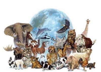 plusieur animaux