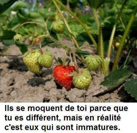 j adore cette metaphore entre les fraises et la phrase