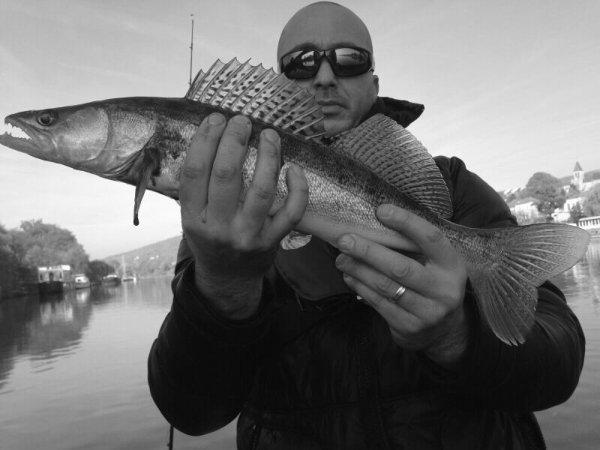 Session en seine aujourd'hui. Les poissons ont été au rendez vous .6 sandres 6 Perches et même un petit brochet.Pas mal de touches aussi,en bref une superbe journée pour nous trois