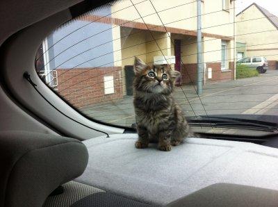 Guizmo le chat ke jai eu le 7 juillet 2011